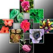 Collage Of Spring Flowers Poster