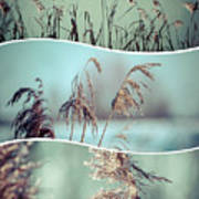 Collage Of Winter Grass Poster