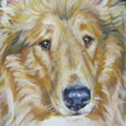 Collie Close Up Poster