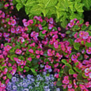 Color Combination Flowers Cc73 Poster