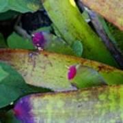 Color Me Purple Poster