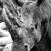 Color Me Rhino Poster
