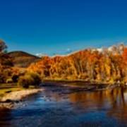 Colorado Cottonwoods In Autumn Poster