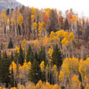 Colorado Fall Foliage Poster