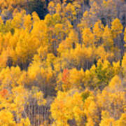 Colorado High Country Autumn Colors Poster