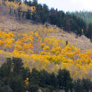 Colorado Mountain Aspen Autumn View Poster