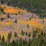 Colorado Rocky Mountains Autumn Colors Poster