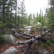 Colorado Trees Poster