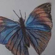 Colored Butterfly Poster