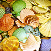 Colored Shells Poster