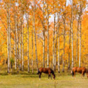 Colorful Autumn High Country Landscape Poster