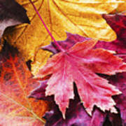 Colorful Autumn Leaves Closeup Poster