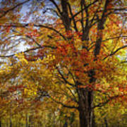 Colorful Autumn Tree In Southwest Michigan By Gun Lake Poster