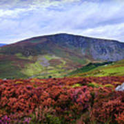 Colorful Carpet Of Wicklow Hills Poster