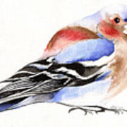Colorful Chaffinch Poster