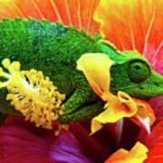 Colorful Chameleon Poster
