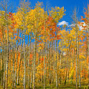 Colorful Colorado Autumn Landscape Poster