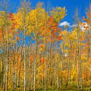 Colorful Colorado Autumn Landscape Poster
