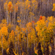 Colorful Colorado Autumn Landscape Vertical Image Poster