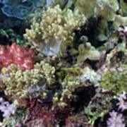 Colorful Coral Reef Poster