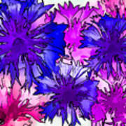Colorful Cornflowers Poster