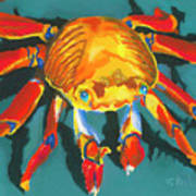 Colorful Crab II Poster by Stephen Anderson