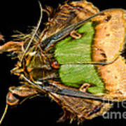 Colorful Cryptic Moth Poster
