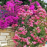 Colorful Flowering Shrubs Poster