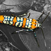 Colorful Insect - Ornate Bella Moth Poster