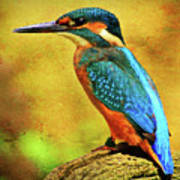 Colorful Kingfisher Poster
