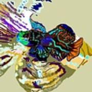 Colorful Manderin Fish Poster