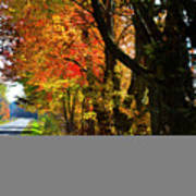 Colorful Maples Poster