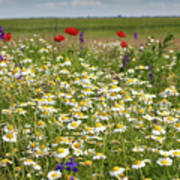 Colorful Meadow With Wild Flowers Poster