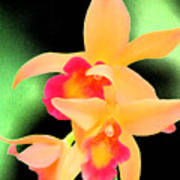 Colorful Orchid Poster