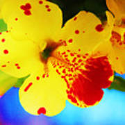 Colorful Pansies Poster