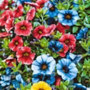 Colorful Petunias 2 Poster