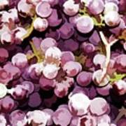 Colorful Pink Tasty Grapes In The Basket Poster