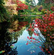 Colorful Reflection In Autumn Gardens. Poster