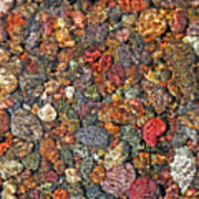Colorful Rocks In Stream Bed Montana Poster