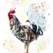 Colorful Rooster Poster