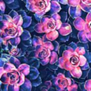 Colorful Succulent Plants Poster