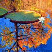 Colors Of Fall On The Lily Pond Poster