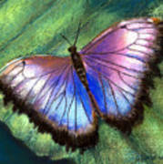 Colors Of Nature - Hunawihr Morpho Poster
