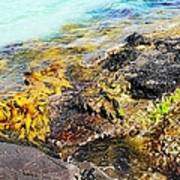 Colourful Sea Life - Fishers Point Poster