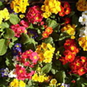 Colourful Spring Flowers Poster