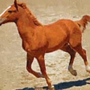 Colt Running Poster