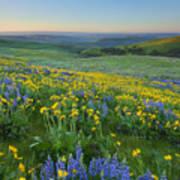 Columbia Hills Wildflower Dawn Poster