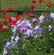 Columbines And Daisies Poster