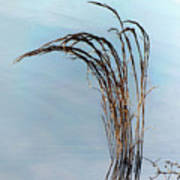 Combie Lake Reeds Poster
