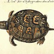 Common Box Tortoise, 1585 Poster